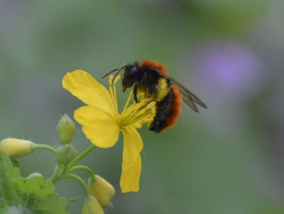 BEEwatching – web e multimedia