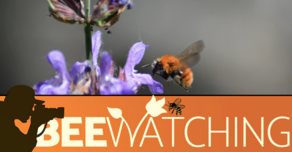 BEEwatching – web e multimedia