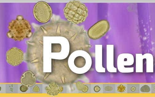 PollenAtlas – web