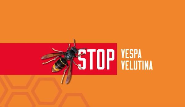 Stop vespa velutina – web e multimedia
